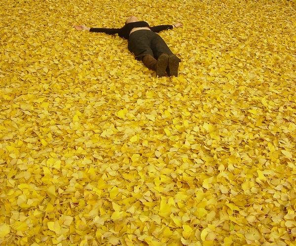 a-single-fallen-leaf-on-earth_l