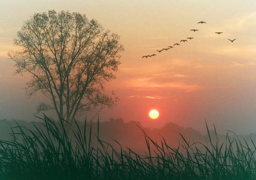 autumn-dawn-1_l