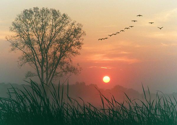 autumn-dawn-1_l