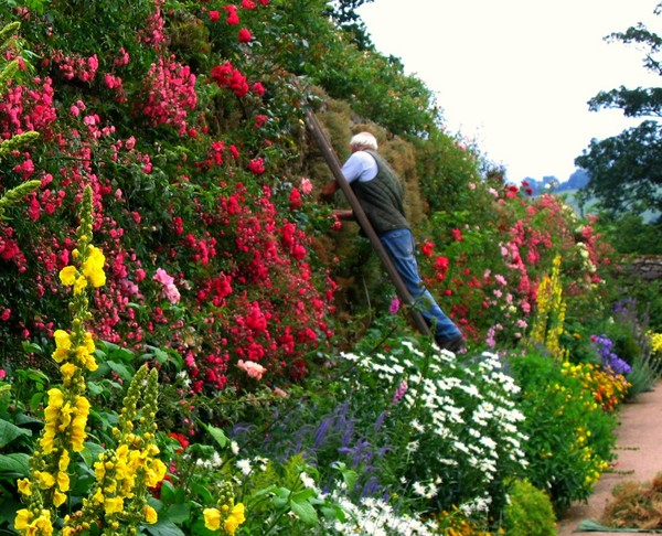 the-head-gardener-at-haddon-hall-derbyshire_l