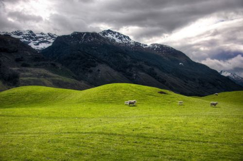 the-soft-hills-on-the-way-to-paradise-new-zealand_l