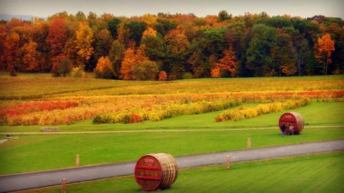 autumn-landscape-8_l