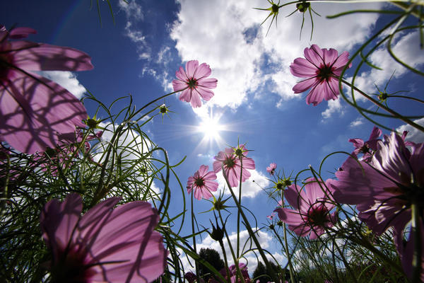 sunny-side-up-3_l