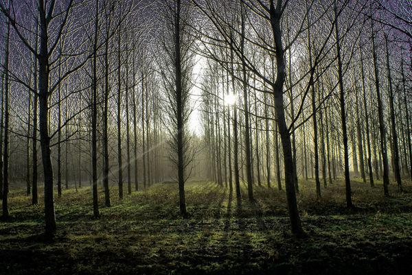 sunny-trees_l