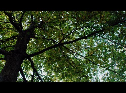 tree-leaf-canopy_l