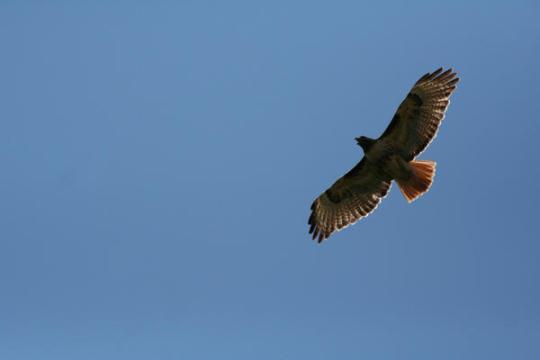 eagle-16_l