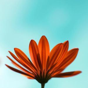 flower-photo_l