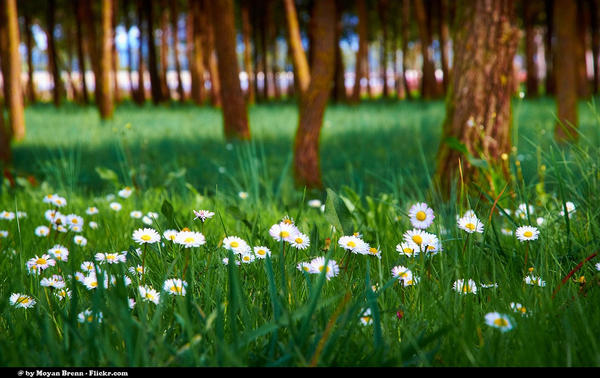 spring-53_l
