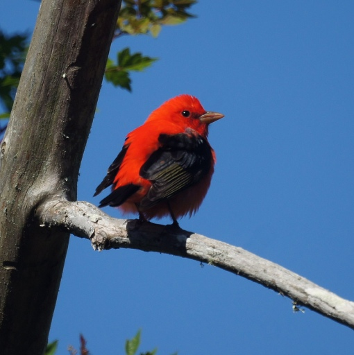 Photo credit: Mike's Birds / Foter / CC BY-SA