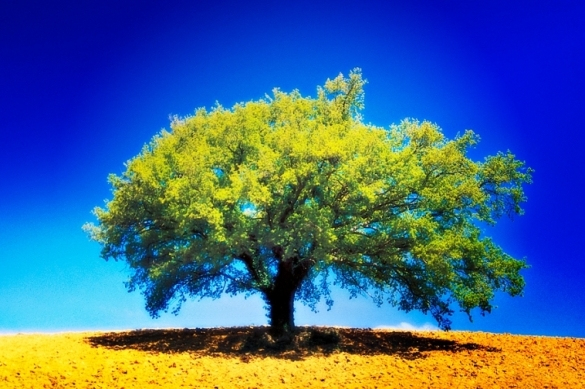 solitary-tree-in-all-its-colourful-glory