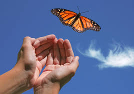 butterfly away from hand